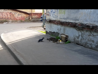 Наглая ворона 8)