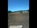 Я катаюсь на лошадке