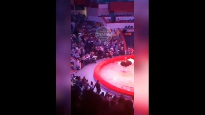 Сегодня в казанском цирке растерянный страус набежал на людей сидящих в первых рядах
