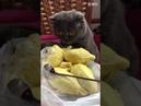 Gato Quase Desmaia Ao Sentir O Cheiro De Um Dos Frutos Mais Repugnantes Do Mundo