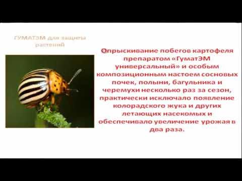 Защита растений от колорадского жука, белокрылки и тли (Арго ЭМ-1 на страже урожая)