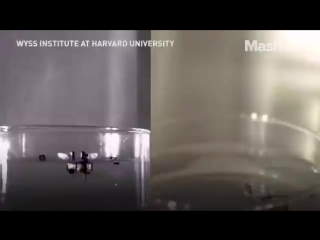 This robot can fly just like a real insect