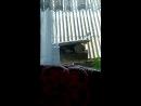 Прилетела птичка не Величка и давай выплясывать под окном.