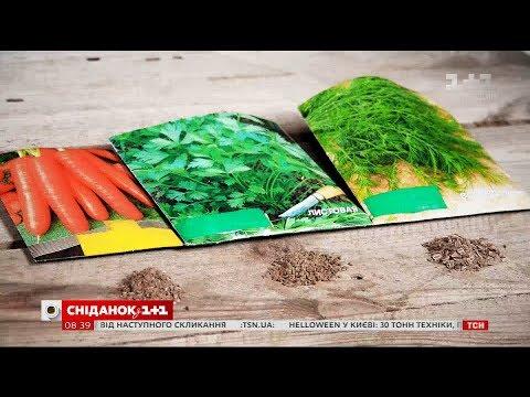 Як обрати насіння та отримати якісний врожай