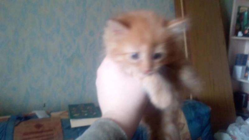 Любимый Котёнок С Которым Завтра Придётся Расстаться (Его Приютит Другая) ~ 15-00 19 Апреля 2018