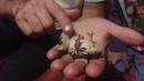 Первый раз такое вижу! Лягушка квакает прямо на руках. Кудряшовский бор. Дача. Новосибирск