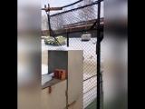 Рысь гуляет по Перми