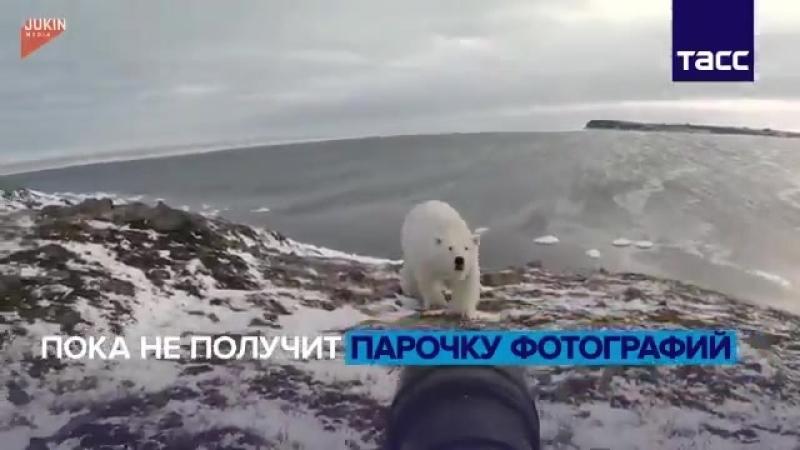 Фотограф приготовился запечатлеть арктические красоты, но его планы чуть не испортил белый медведь - - Видео ТАССМЧС РоссииReute