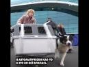 Она спасает собак