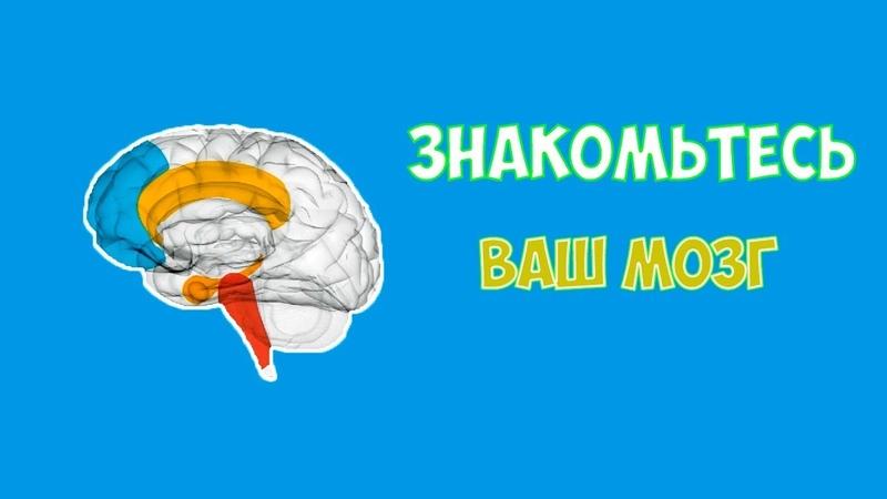 Знакомьтесь Ваш Мозг Урок 1 Вступление