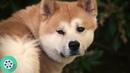 Хати мы тебя любим. Но если тебе надо идти. Мы это поймём. Хатико: Самый верный друг (2009) год.