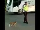 Всем стоять Котик проходи