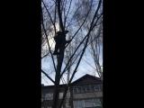 Гуки на деревьях
