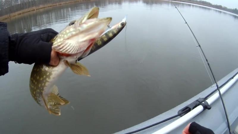 Рыбалка с Рыбаковым Вот это да Megabass Kanata разловлен на первой рыбалке