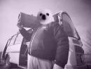 Грибы - Тает Лёд (ft. Пёс Гейб)