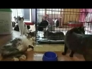 Вечерний приют для бездомных животных