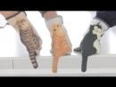 Котики рукавички