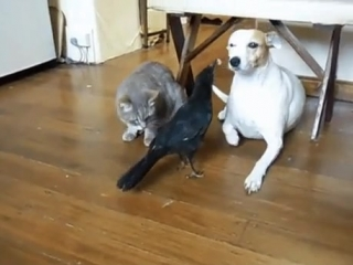 Helpful-bird-feeds-cat-and-dog.mp4