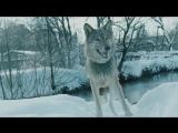 Премьера клипа! MNOGOZNAAL - МИНУС 40[GODNO]