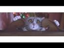 Про кота рождественский мультик