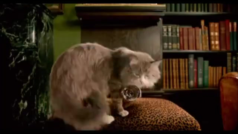 Угарный кот