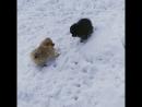 зимние боевые хомяки