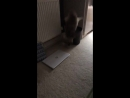 Cat suddenly jumps and bumps into the radiator Cat is scared of the hairdryer