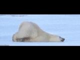 polar bear monday GIF-original