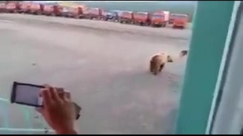 Сторожевой пес спас вахтовиков от медведя