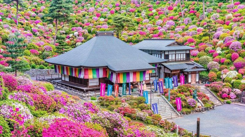 Azelea garden in Shiofune Kannon Temple - (shot on Samsung NX1)