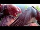 Несчастный случай на рыбалке. Спасение птицы.