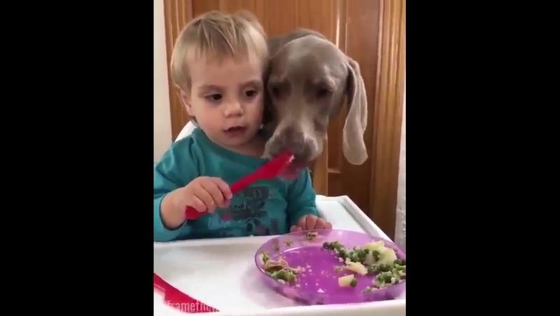 Избаловали собаку