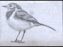 كيف ترسم طير صغير بالقلم الرصاص....How to draw a small bird By pencil