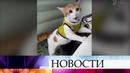 В интернете набирает популярность ролик про кота, кричащего «гол!»