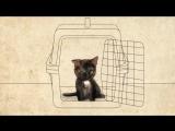 Котенок до последних дней утешал умирающую девочку. Русская озвучка