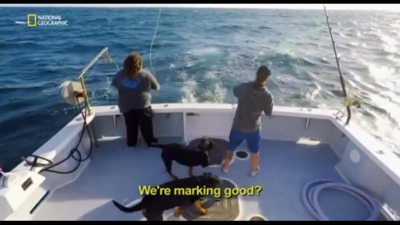 Дикий тунец Север против Юга 4 сезон 6 серия. Тунец и чудовище / Wicked Tuna: North vs. South (2017)