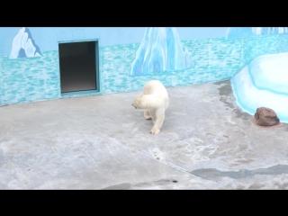 Белый медведь в зоопарке Лимпопо