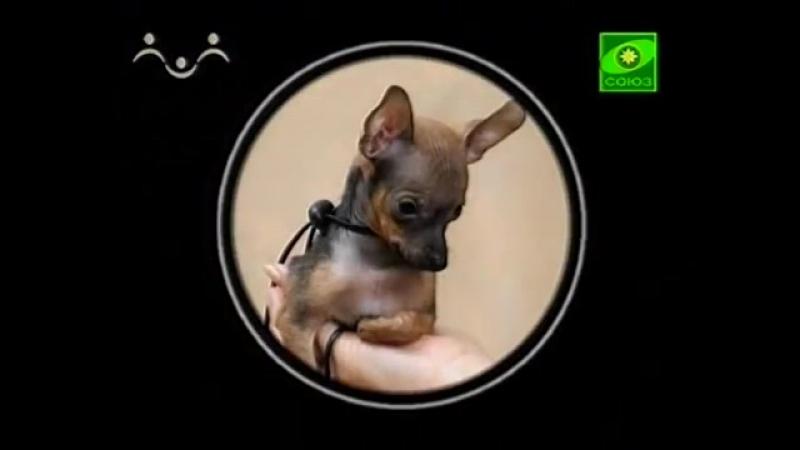 Выставка собак (1 путешествие) (из цикла