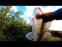 Река Тобол ловля щуки и судака на джиг в начале августа