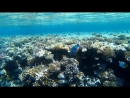 Красное море - Релакс Магические рыбки часть 1.3