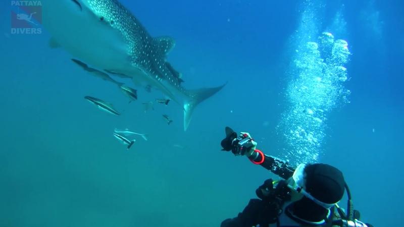 Заплыв с китовой акулой вокруг скалы Хин-Лак-Бат | Дайвинг на Ко-Чанге, Таиланд