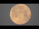 Луна пролет птицы на фоне Луны 28.06.2018