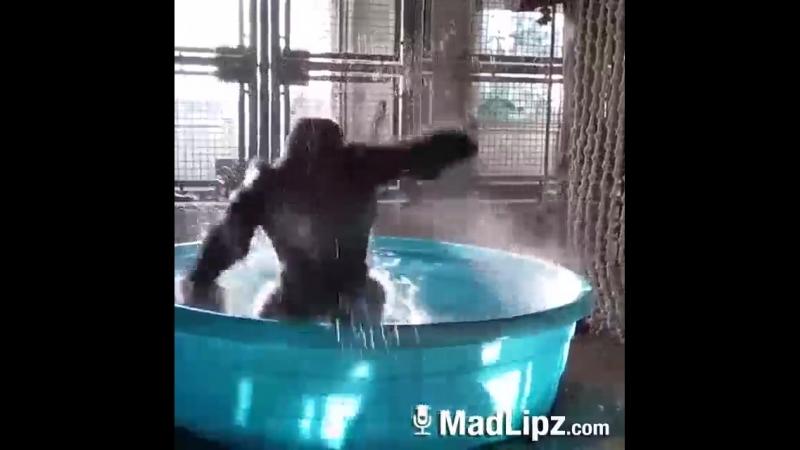 Gorill