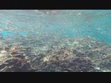 Коралловые рифы, рыбки. Турция, Средиземное море.