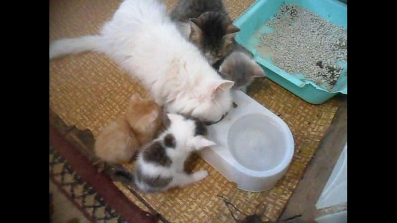 Котята Едят Ходят в лоток Приём пищи на камбузе бабушка авторитет