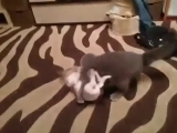 Кот vs Пёс