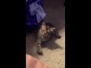 Кот повторяет движения хозяйки лапкой