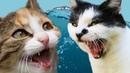 Самые смешные животные 2018. Коты и котики лучшие видео