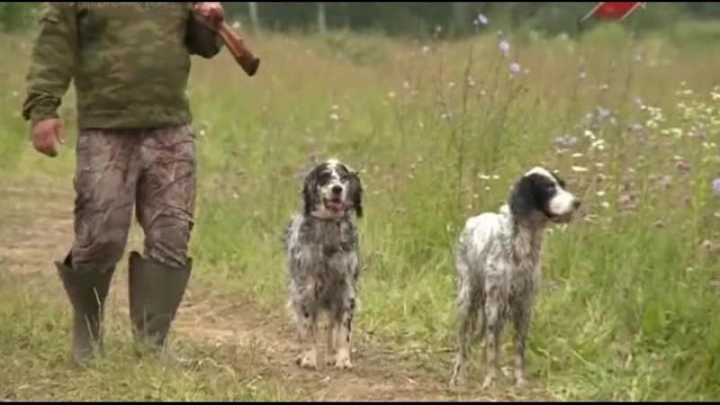 Охота - собачья работа - 10 серия