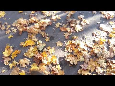 Шуршит под ногами опавшая листва